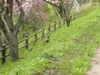 20064kouhan_067_1