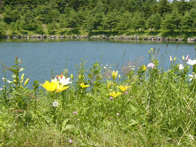 20068seisenryoukitakaru_069