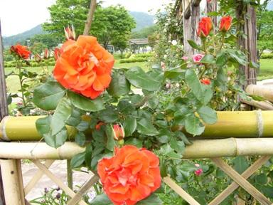 20065kouhan_116